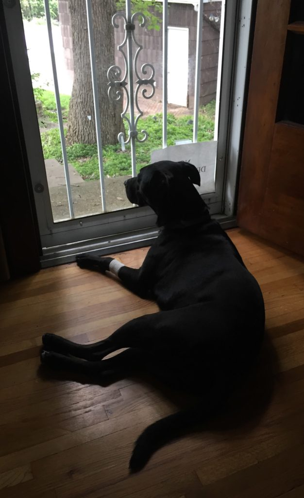 A picture of Lizzie watching for squirrels