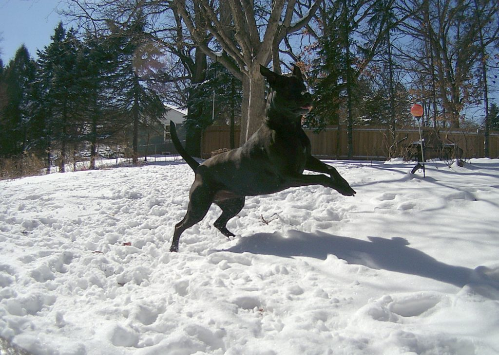 A picture of Lizzie playing in the backyard.