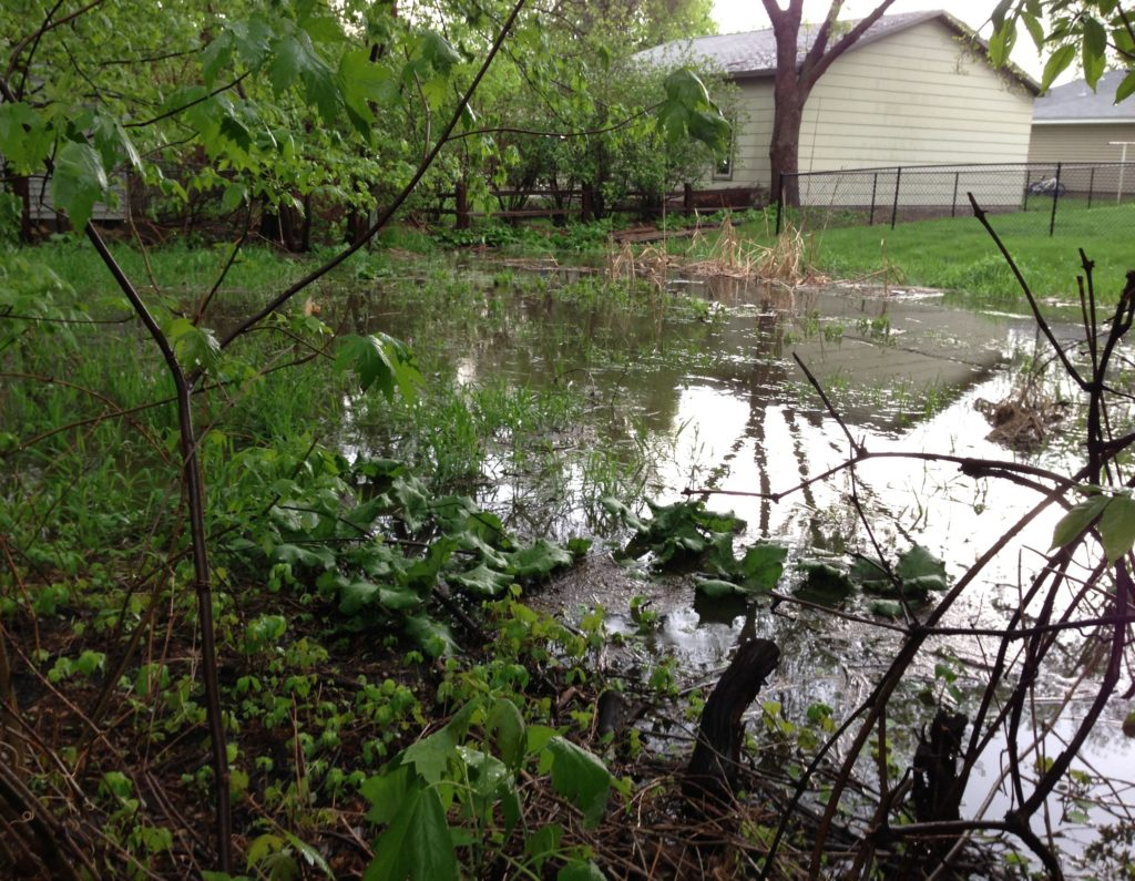 A picture of our neighbor's flooded backyard.