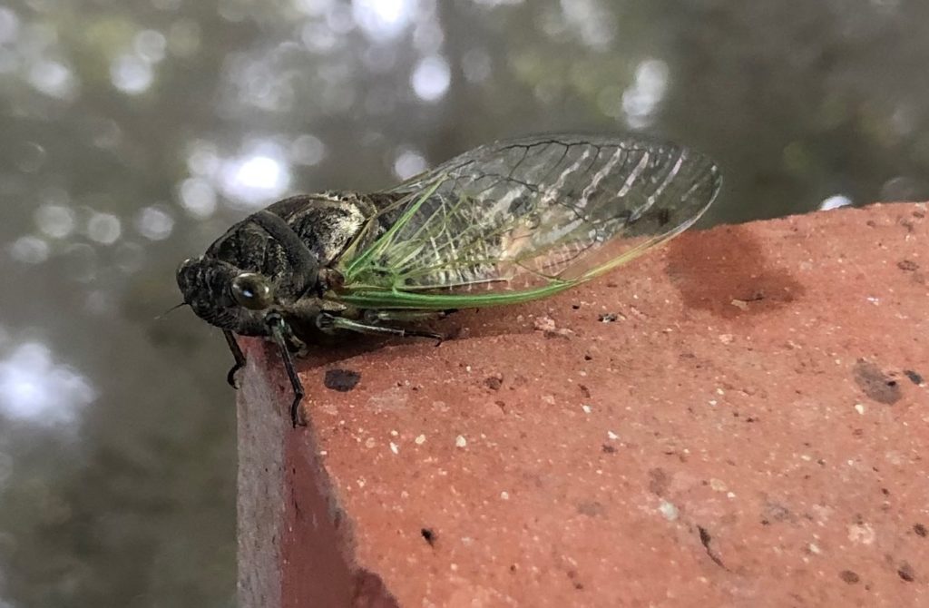 A picture of a cicada on a brick