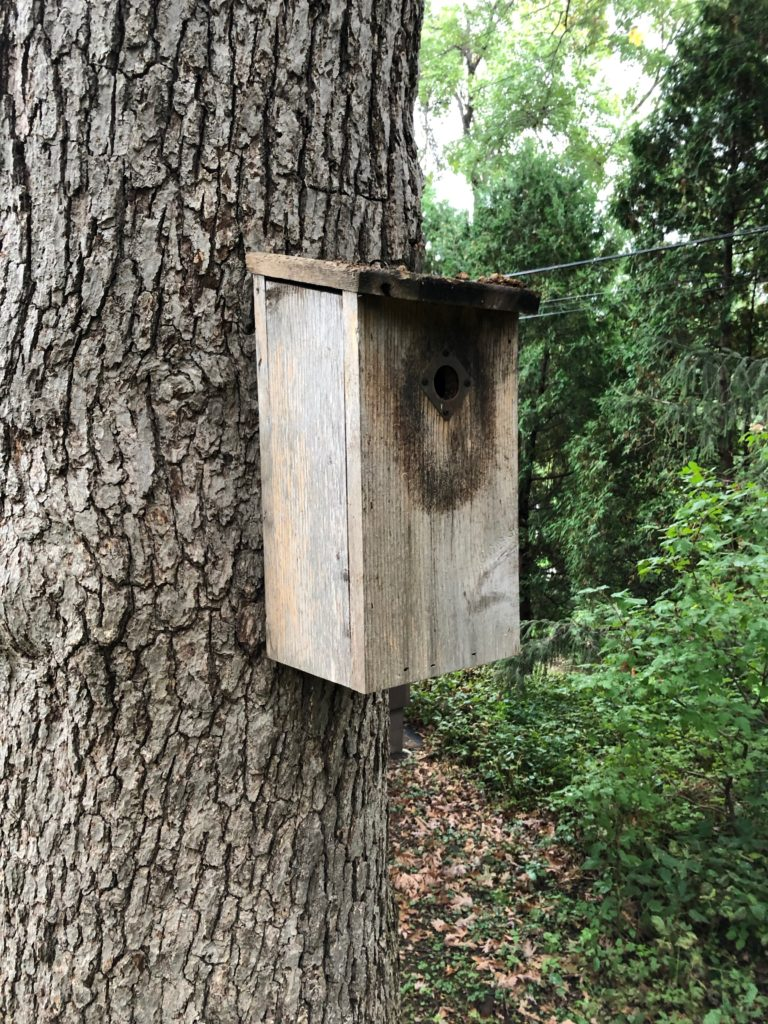 The nest box used by the nuthatches