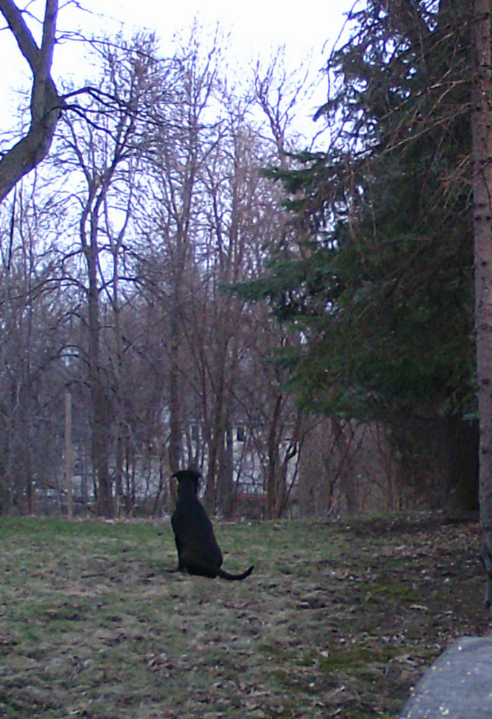 Lizzie watching a squirrel in a tree