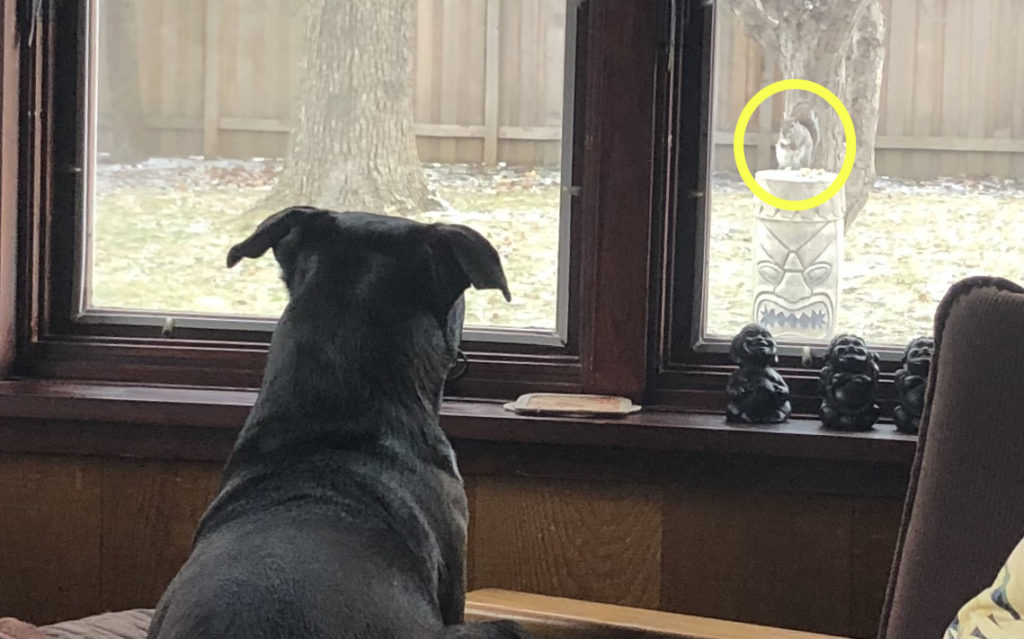 Lizzie watching a squirrel eating peanuts